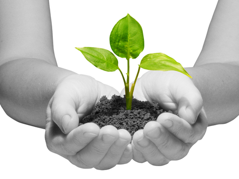 sustainability-new-life credits Debbie Barnett